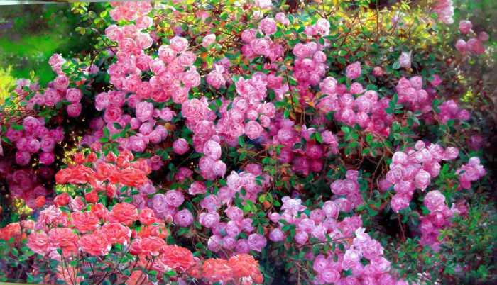 rose-garden-9-bo-li.jpg