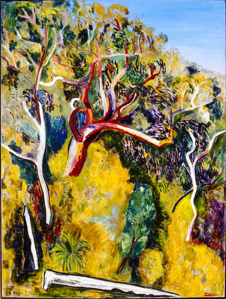 Angophora Trees, Royal National Park