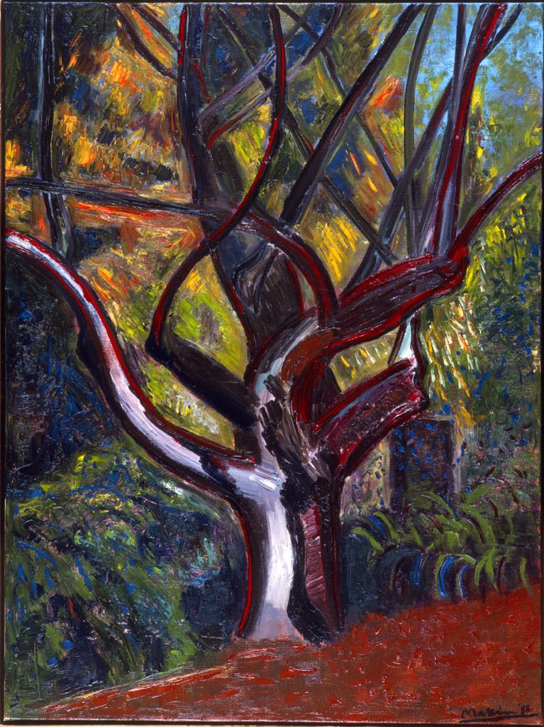 Glen Harrow Oak No2
