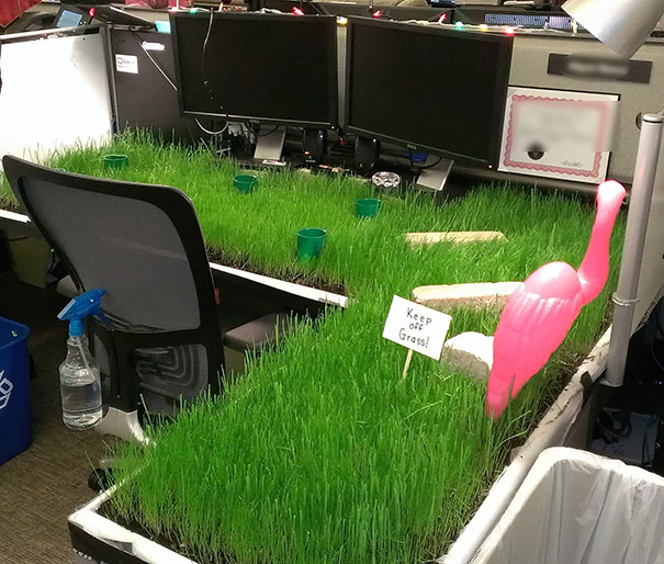 Lawn prank.jpg