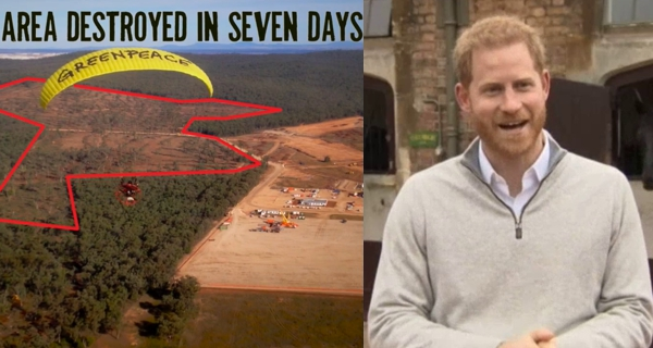 Screencaps from  Greenpeace  and  ABC News