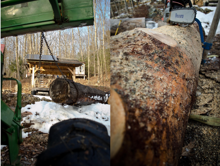 Skidding Log and Debarking