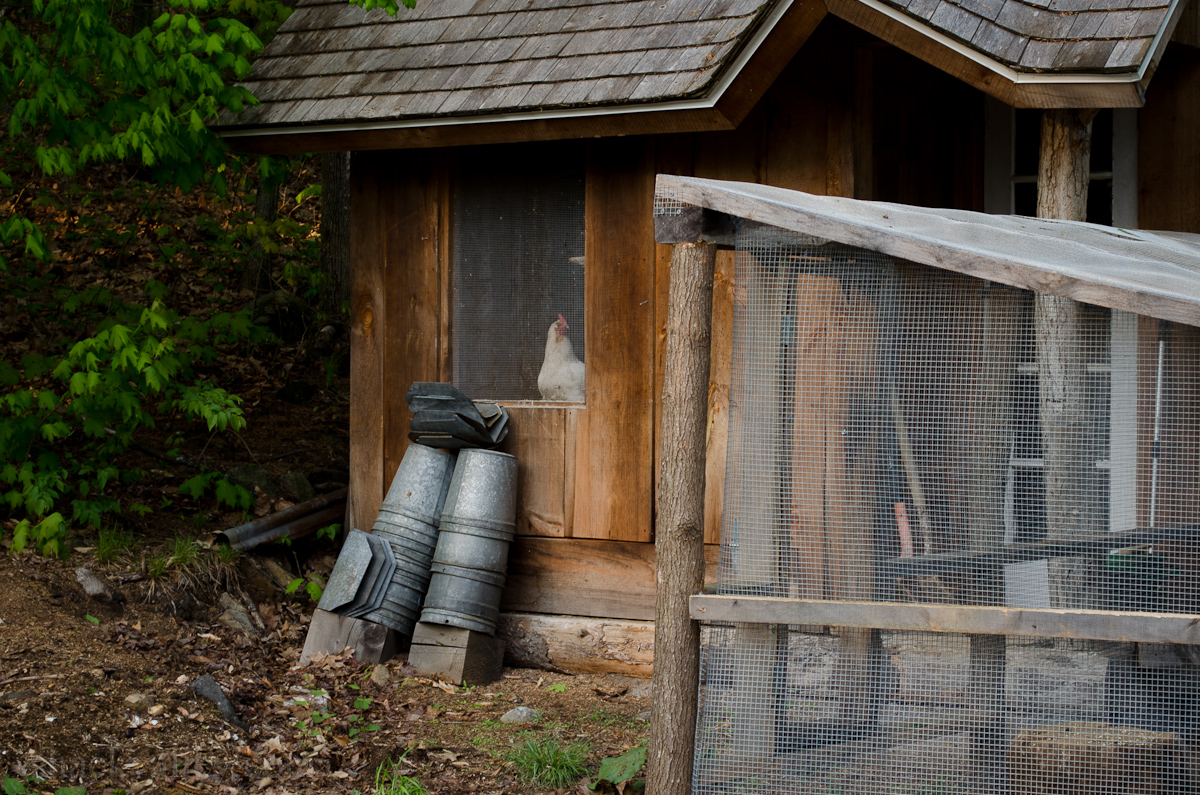 New Chicken Coop Run-5.jpg