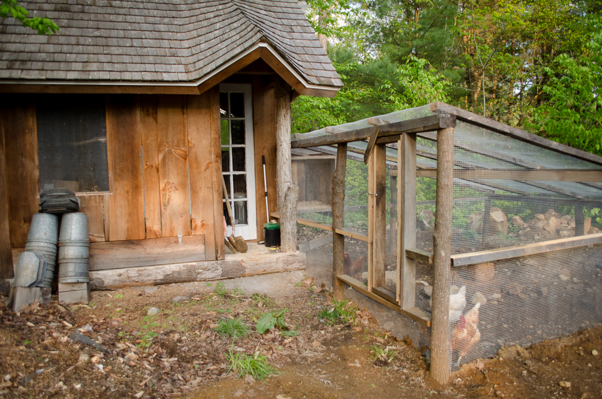 New Chicken Coop Run-3.jpg