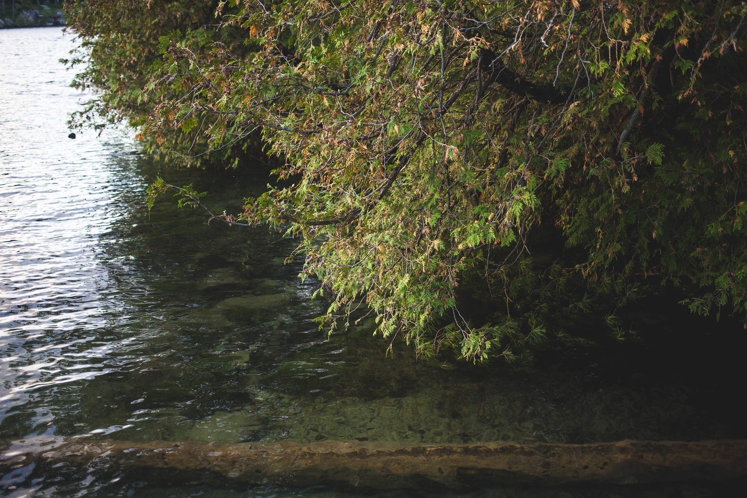 Tree meets Lake