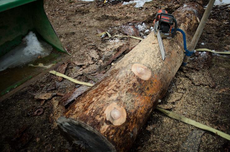 Log on Ground.jpg