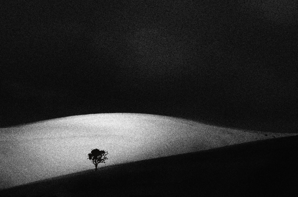 Distant Sands by Wendy Philip