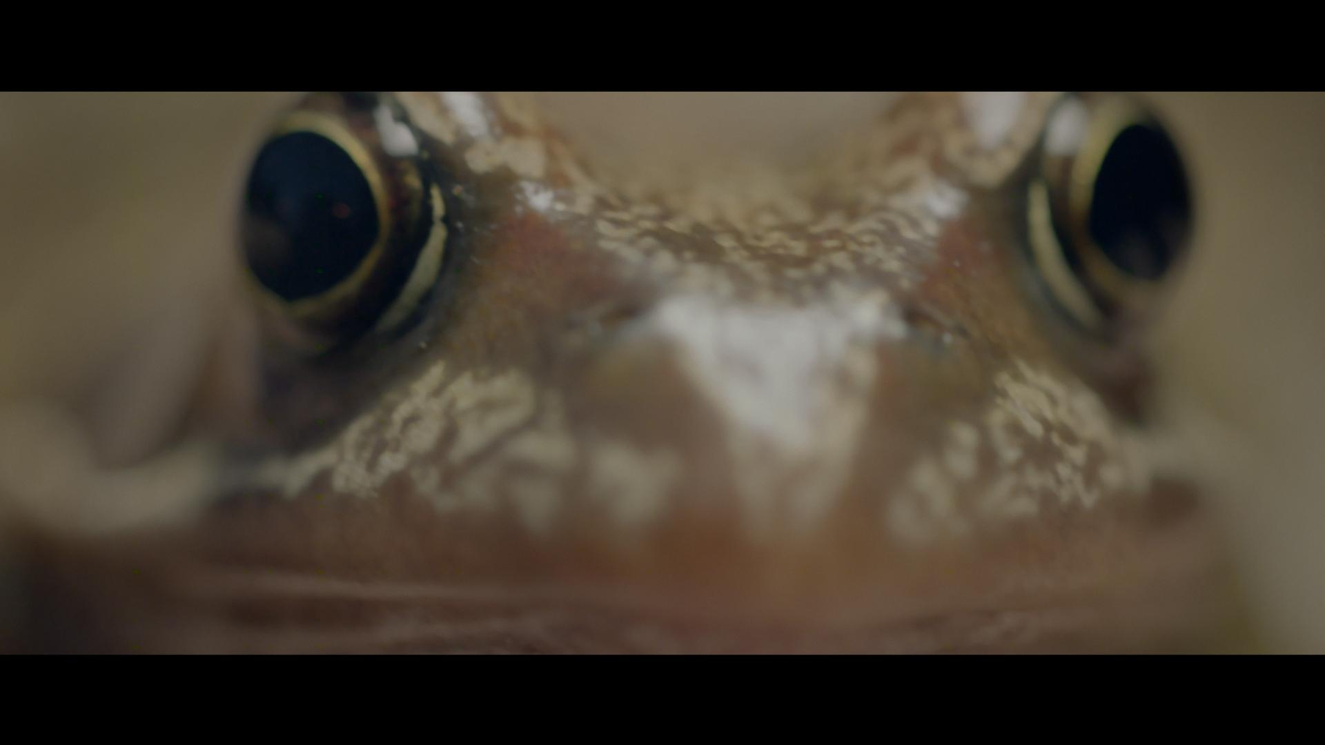 Frog spawn still 2.jpg