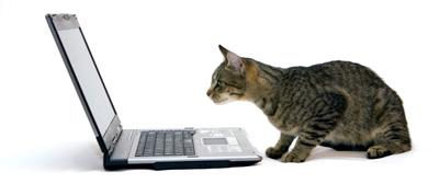 cat-laptop (1).jpg