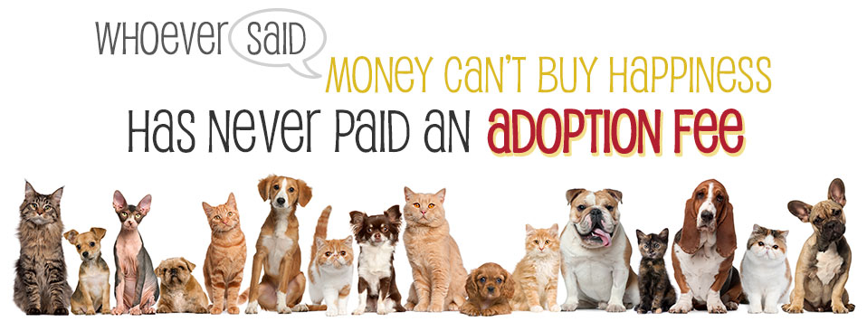 Adoption Application We Care For Animals