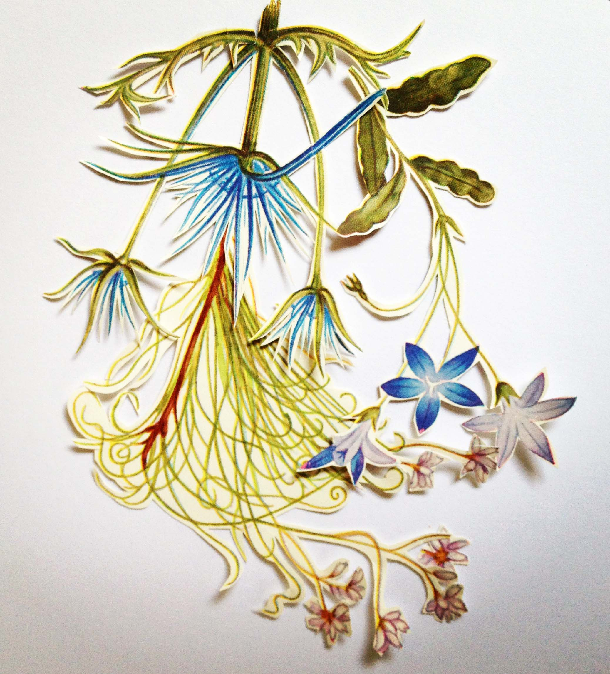 flora6.jpg