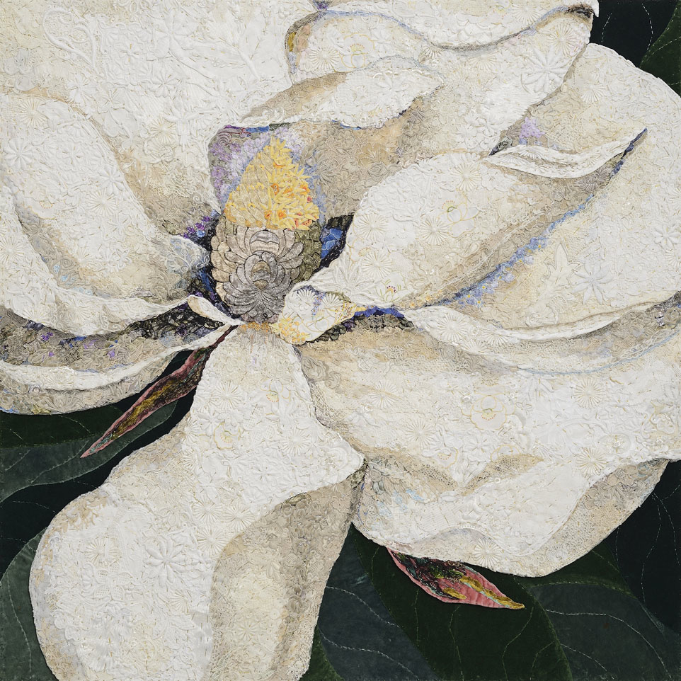 Magnolia georgiana 2014 after George Dionysius Ehret 1743
