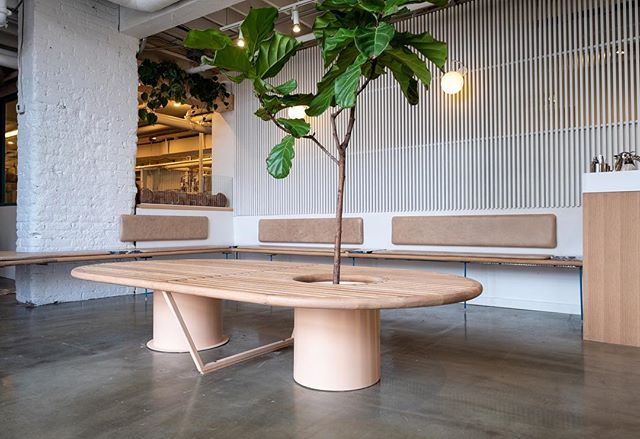 White Oak centre bench and home to a fiddle leaf fig tree. @brodflour photo cred: @laurajeanmarie