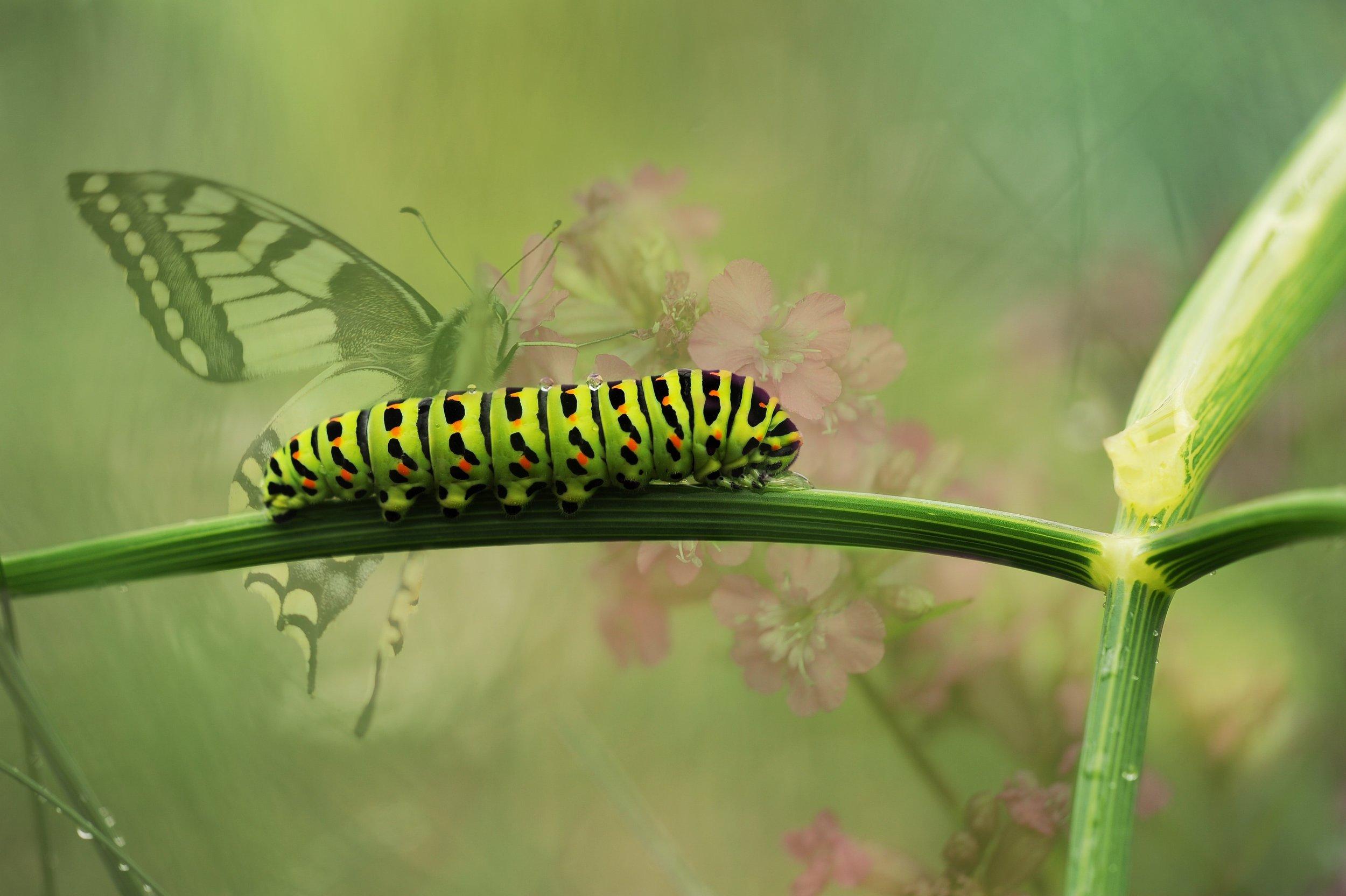 bloom-blossom-blur-caterpillar-butterfly.jpg