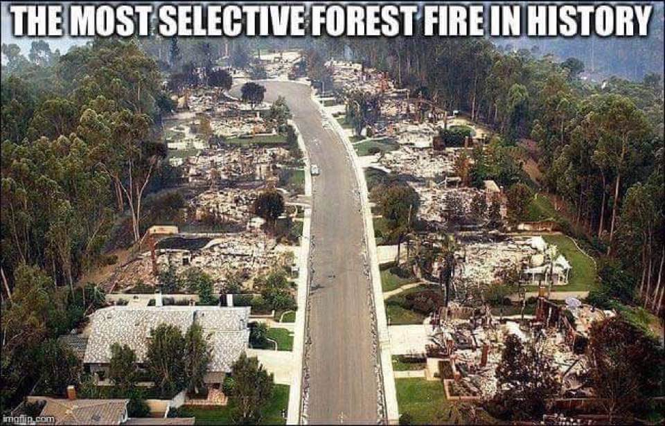 Homes, in California fires damage path, leveled yet surrounded by lush trees  This photo is used for educational purposes under Fair Use Law