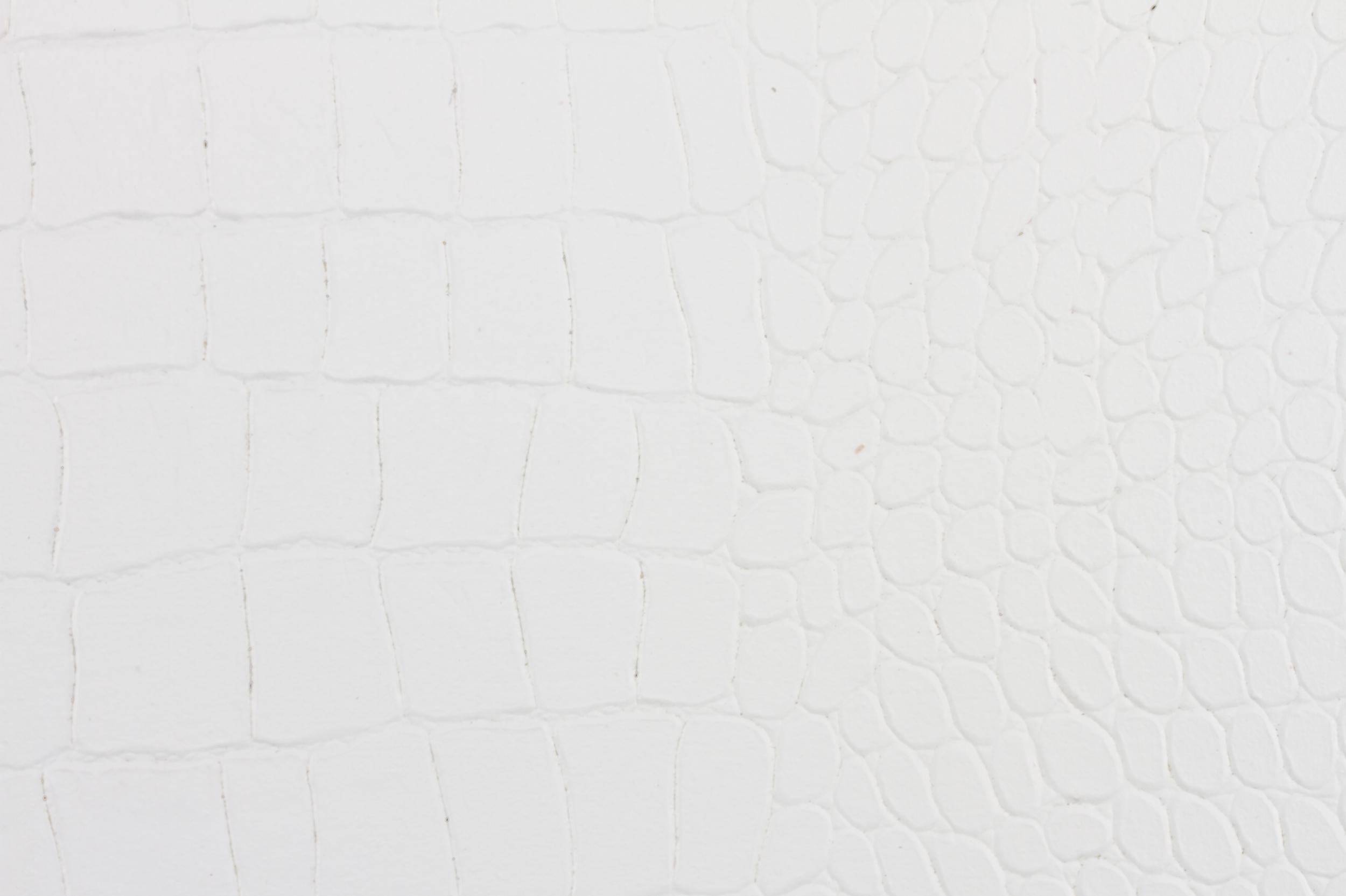 White Crocodile (2).jpg