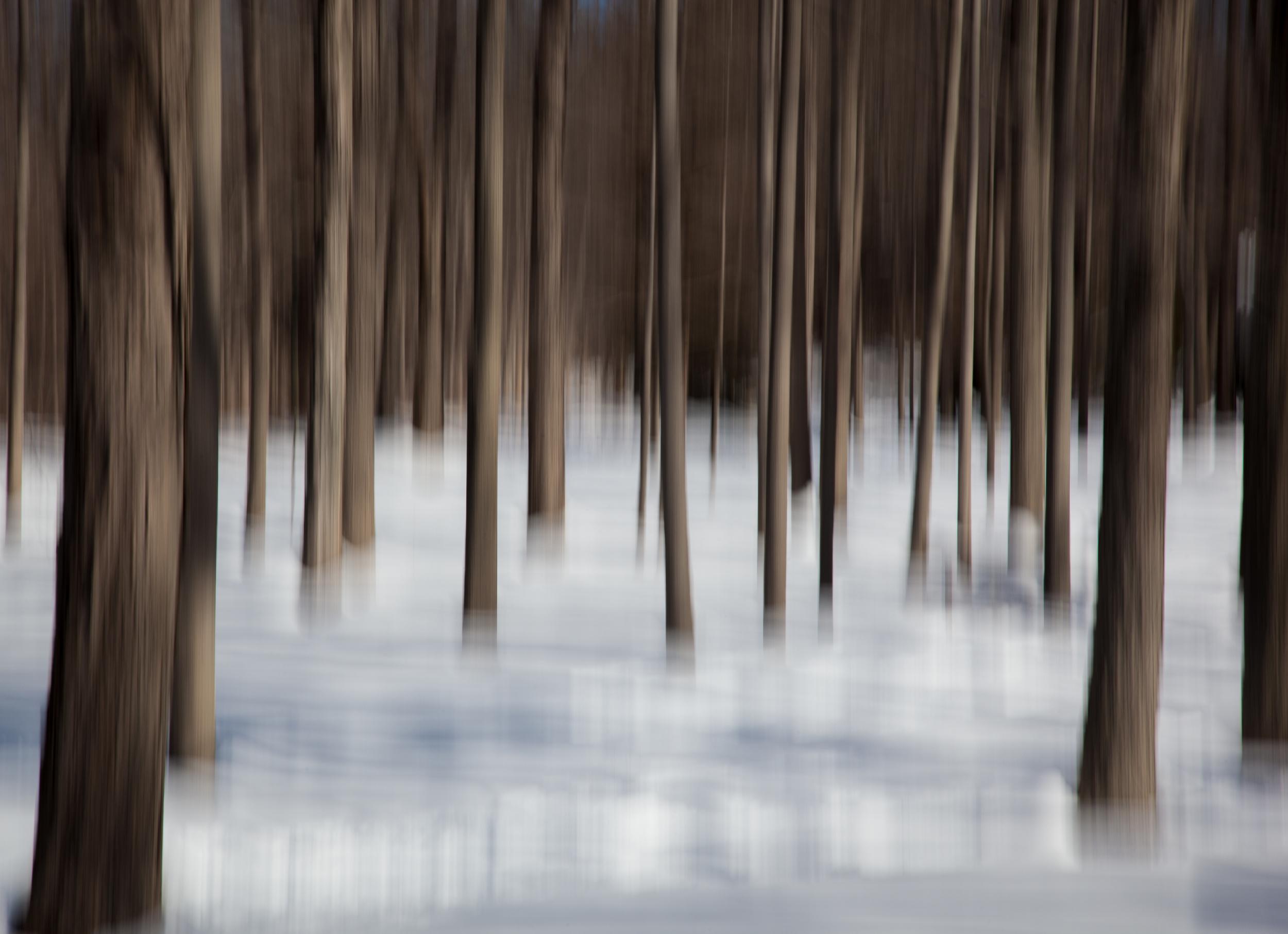 Woodland Impression - Winter