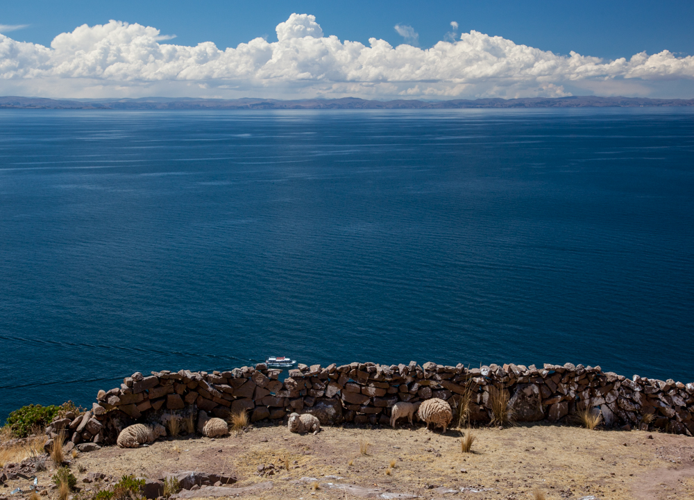Sheep with one hell of a view.  Bolivia is in the background.