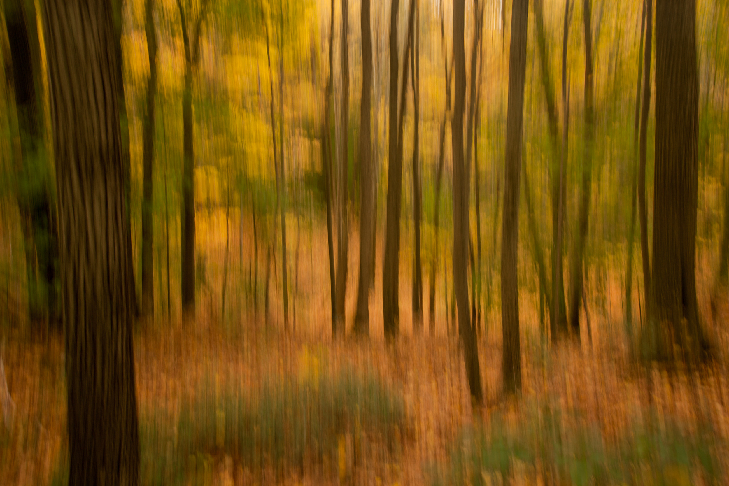 Woodland Impression - Autumn