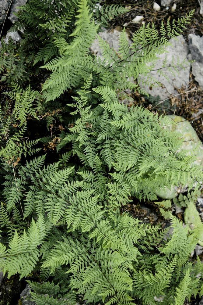 diana ascarrunz - longhorn caverns - austin (17 of 26).jpg