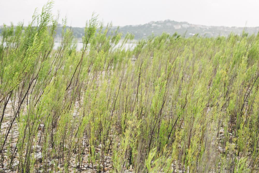 diana ascarrunz - lake travis - photography (2 of 27).jpg