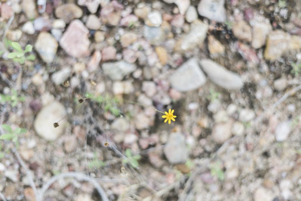 diana ascarrunz - lake travis - photography (11 of 27).jpg