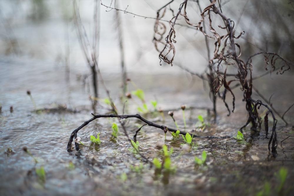 diana ascarrunz - lake travis - photography (18 of 27).jpg