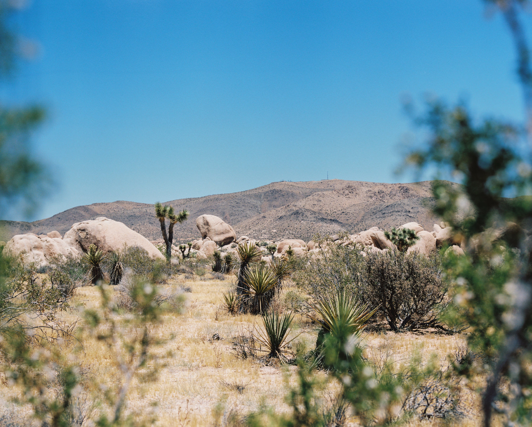 Palm Springs Joshua Tree Travel Film - Diana Ascarrunz Photography-64.jpg