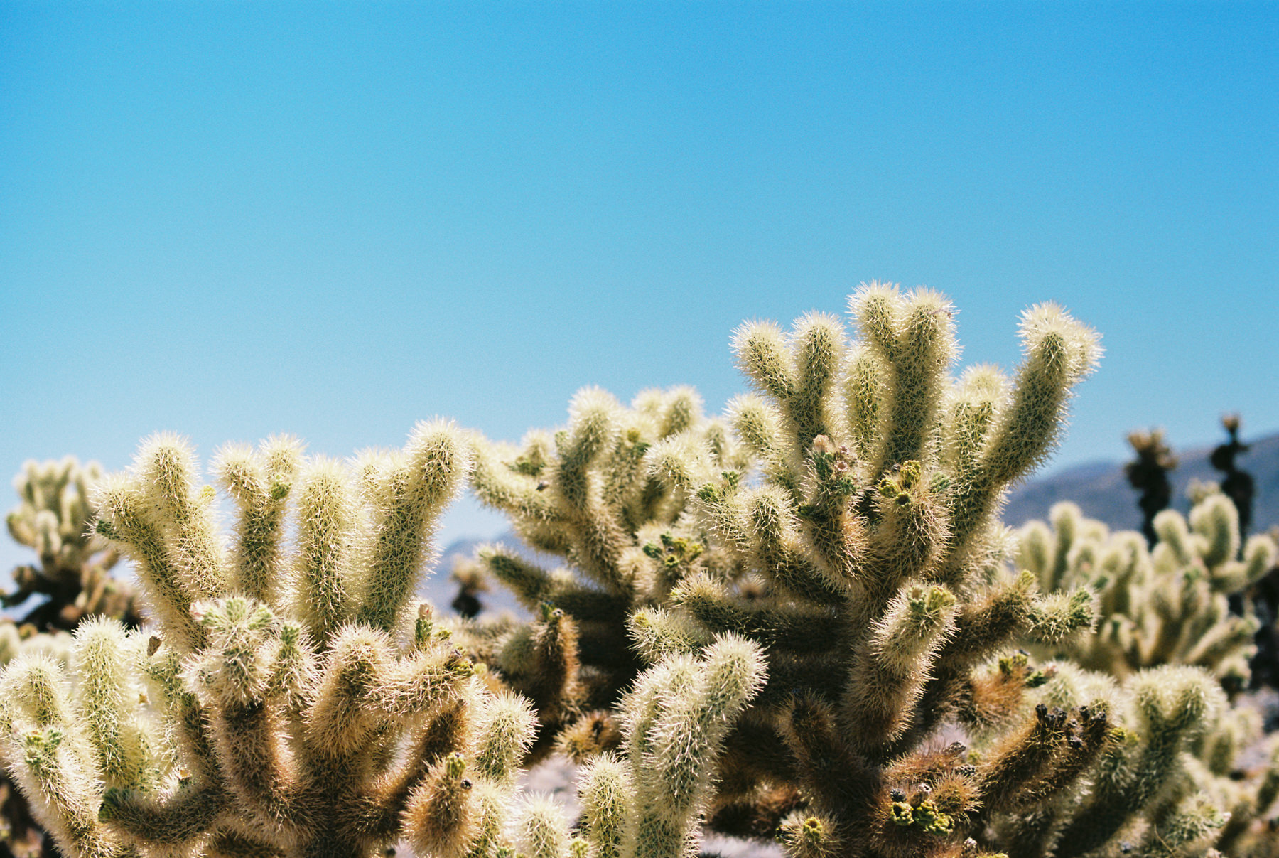 Palm Springs Joshua Tree Travel Film - Diana Ascarrunz Photography-48.jpg
