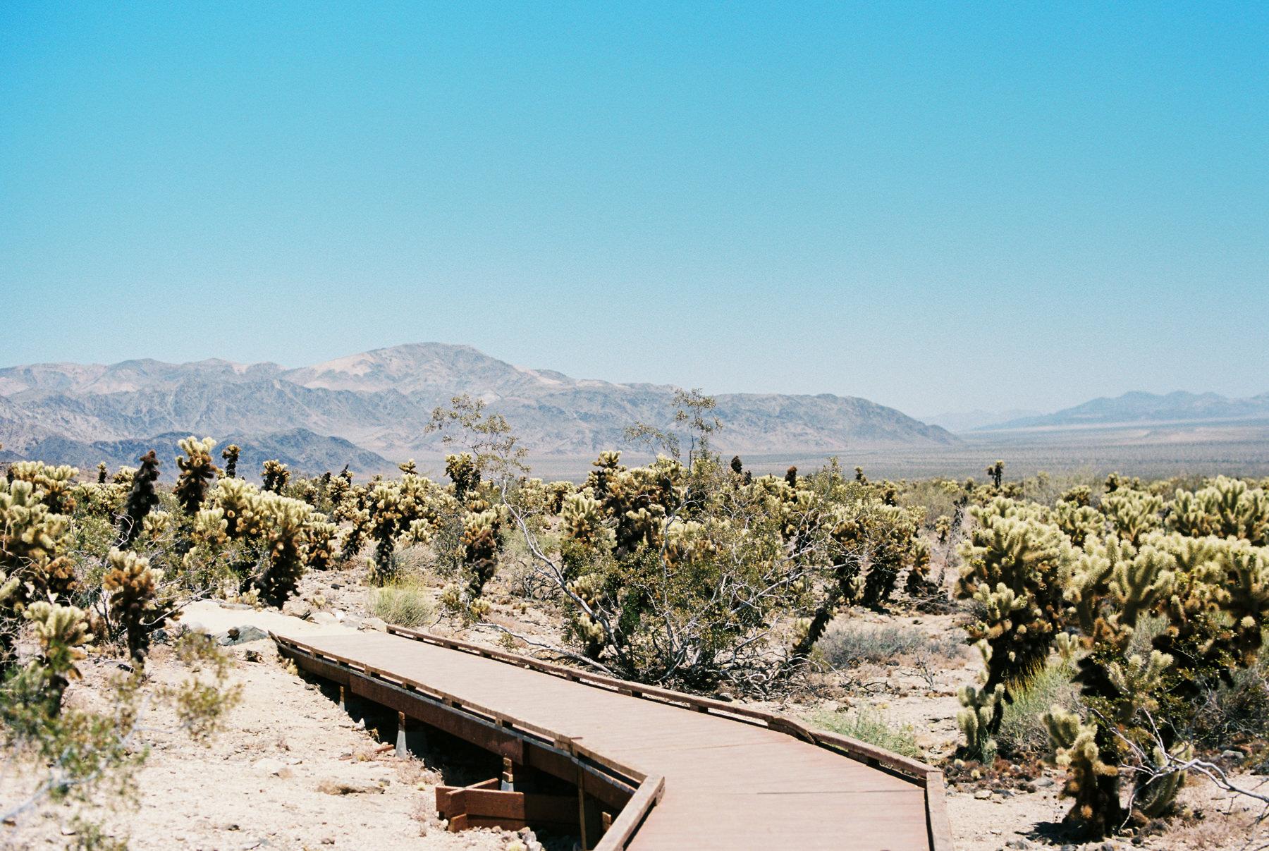 Palm Springs Joshua Tree Travel Film - Diana Ascarrunz Photography-49.jpg