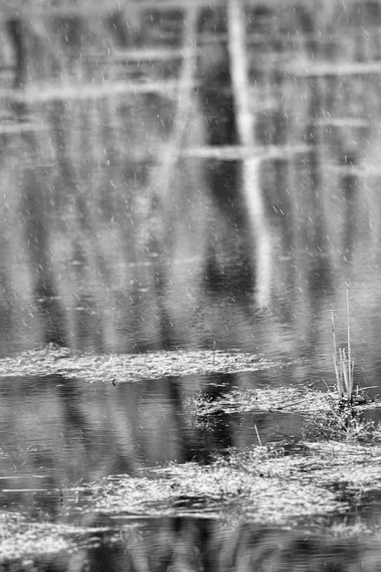 "April 5, 2008:   Canon 1D mark ii + Canon 300mm f2.8L IS @ f2.8    Average Temperature 45 ℉, .1"" mixed Precipitation"