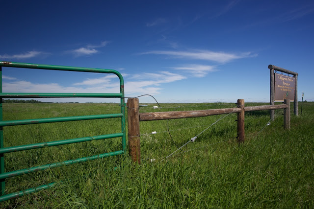 Chippewa Prairie Preserve - Milan, MN    Canon 5D Mark iii + Canon 17-40mm f4.0L