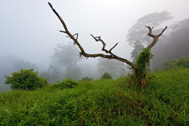 I Call it Shangri-La - Selva Verde Primary Forest, Costa Rica    Canon 5D Mark III + Canon 17-40mm f4.0L @ 19mm / f16