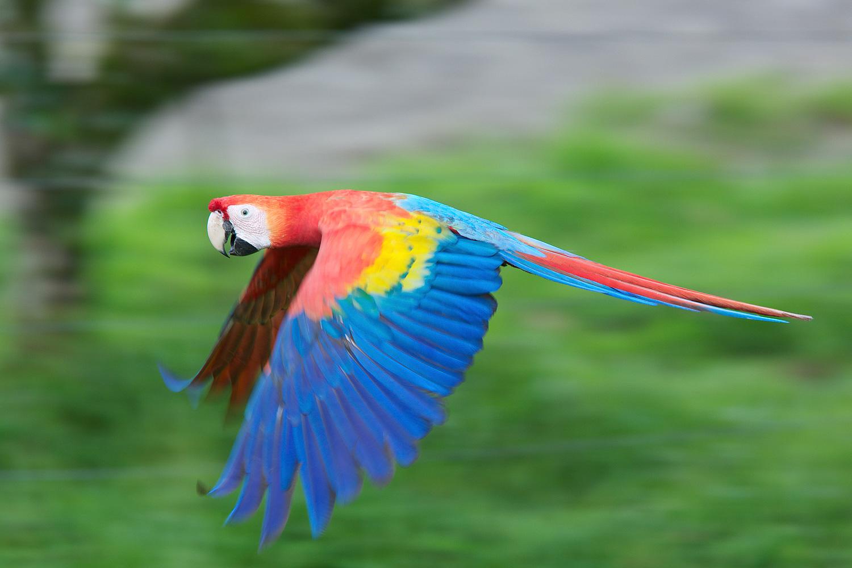 Macaw_93A4907.jpg