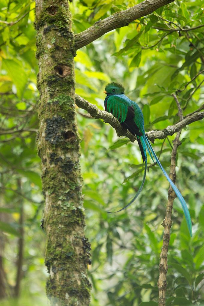Quetzal002.jpg