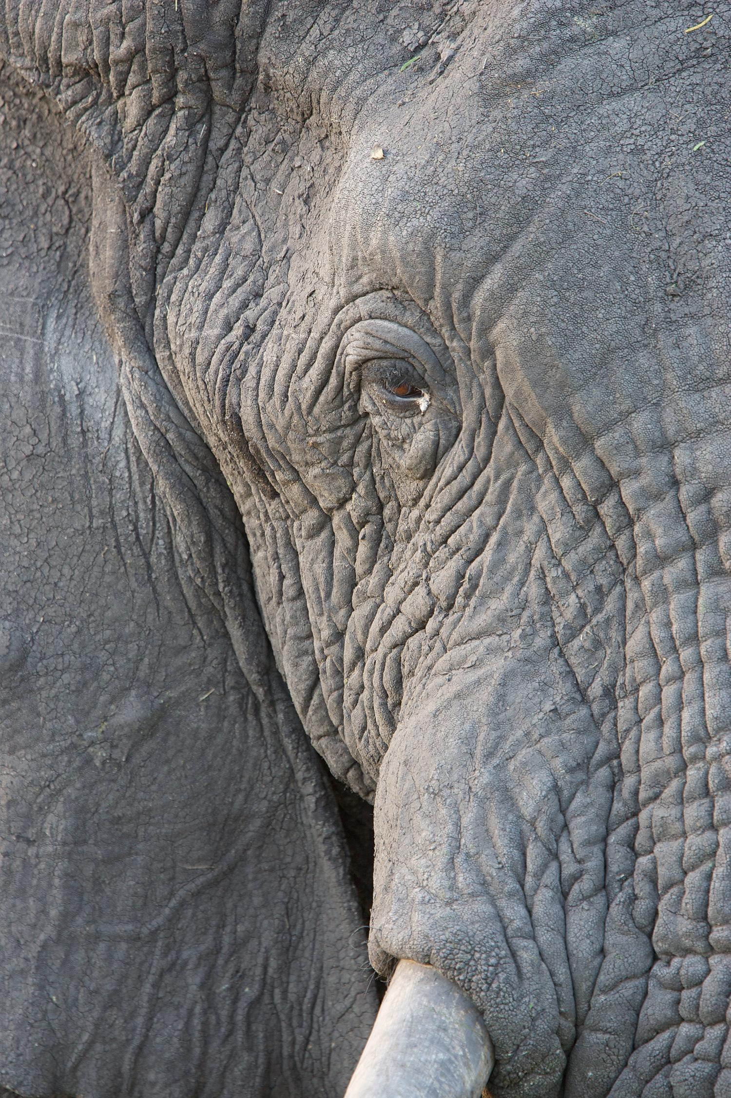 ElephantKiraWira06-12-08_0104.jpg