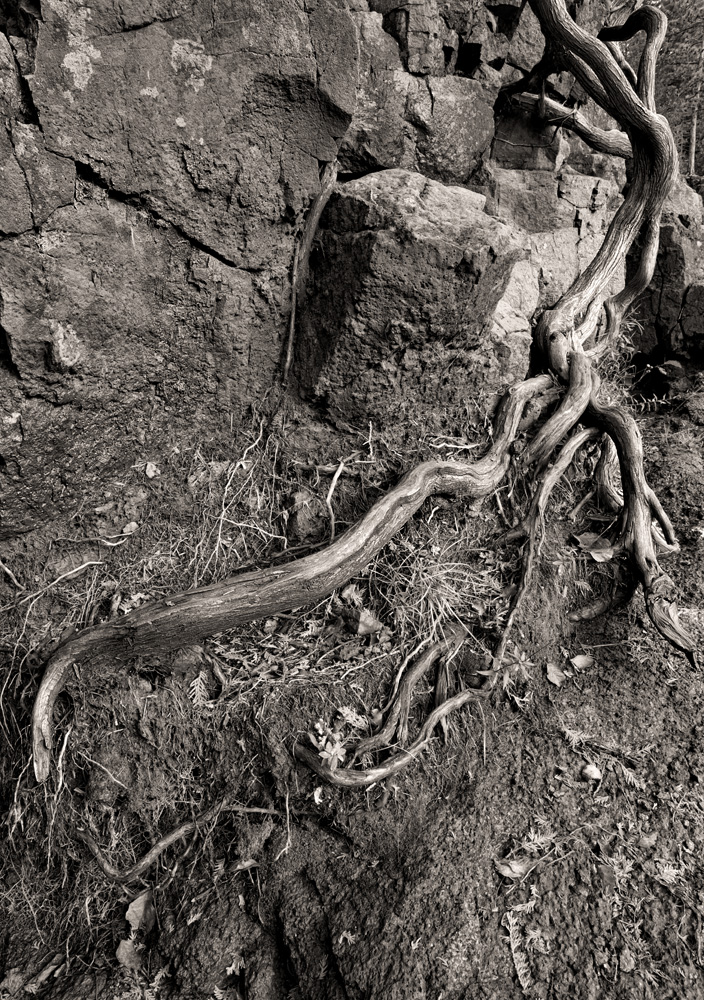 Roots - Gooseberry Falls State Park, MN