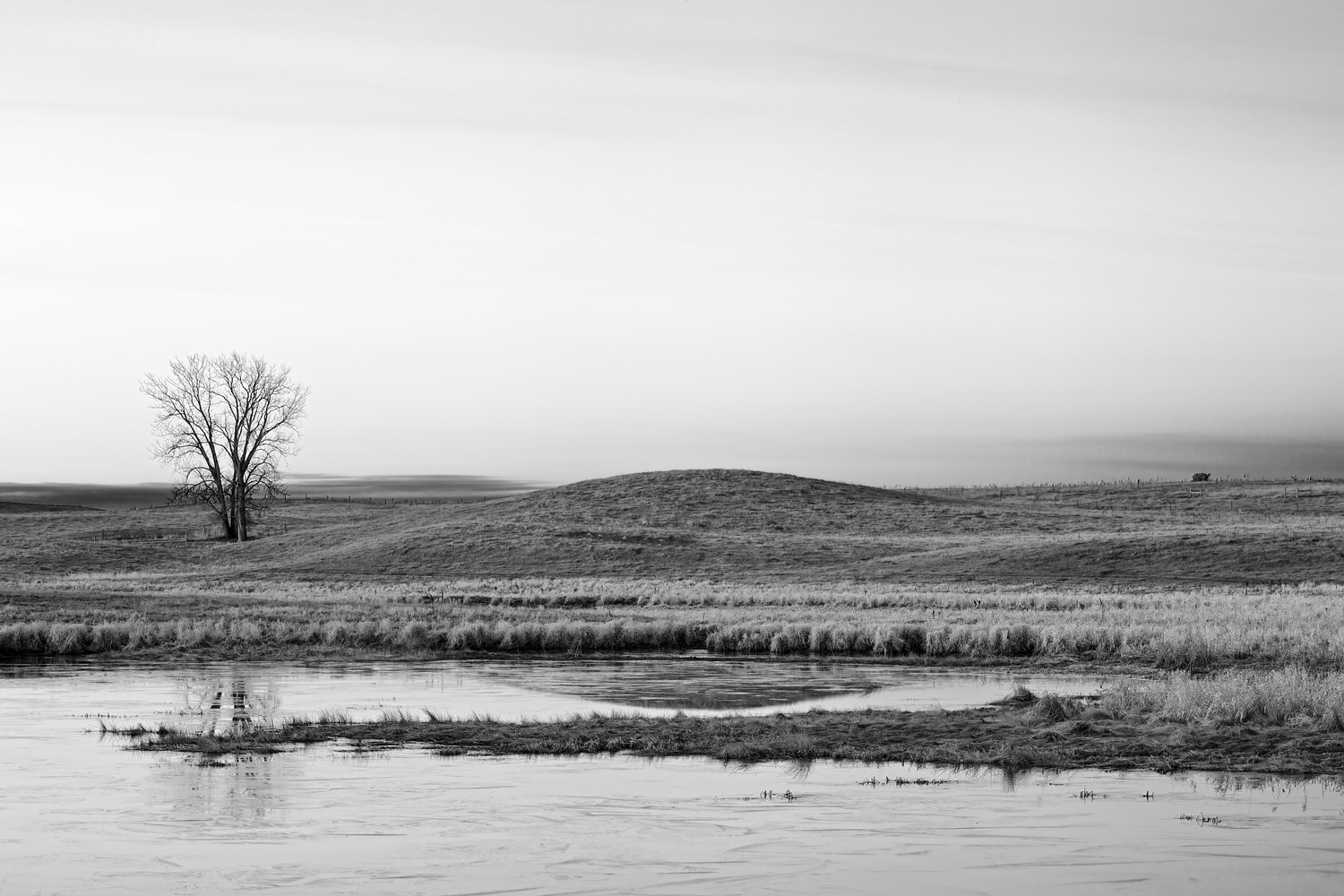One Tree Farm - Stillwater Area, MN    Canon 5D Mark iii + Canon 100mm f2.8 Macro