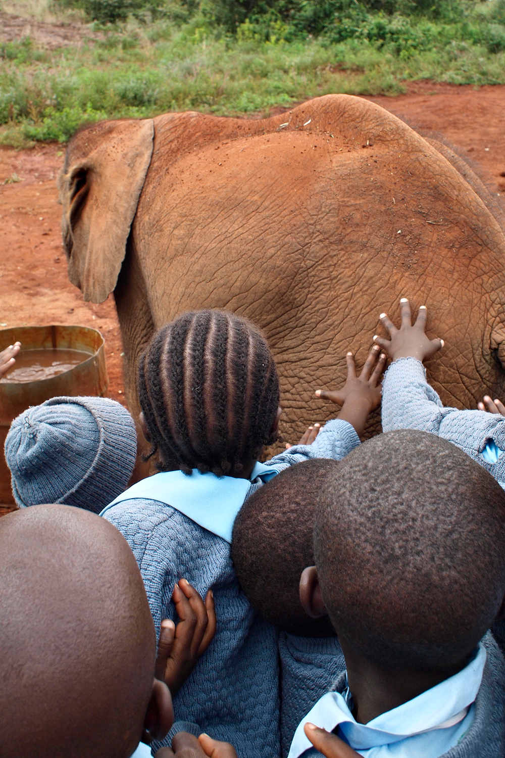 Children reaching out, David Sheldrick Elephant Orphanage, Kenya