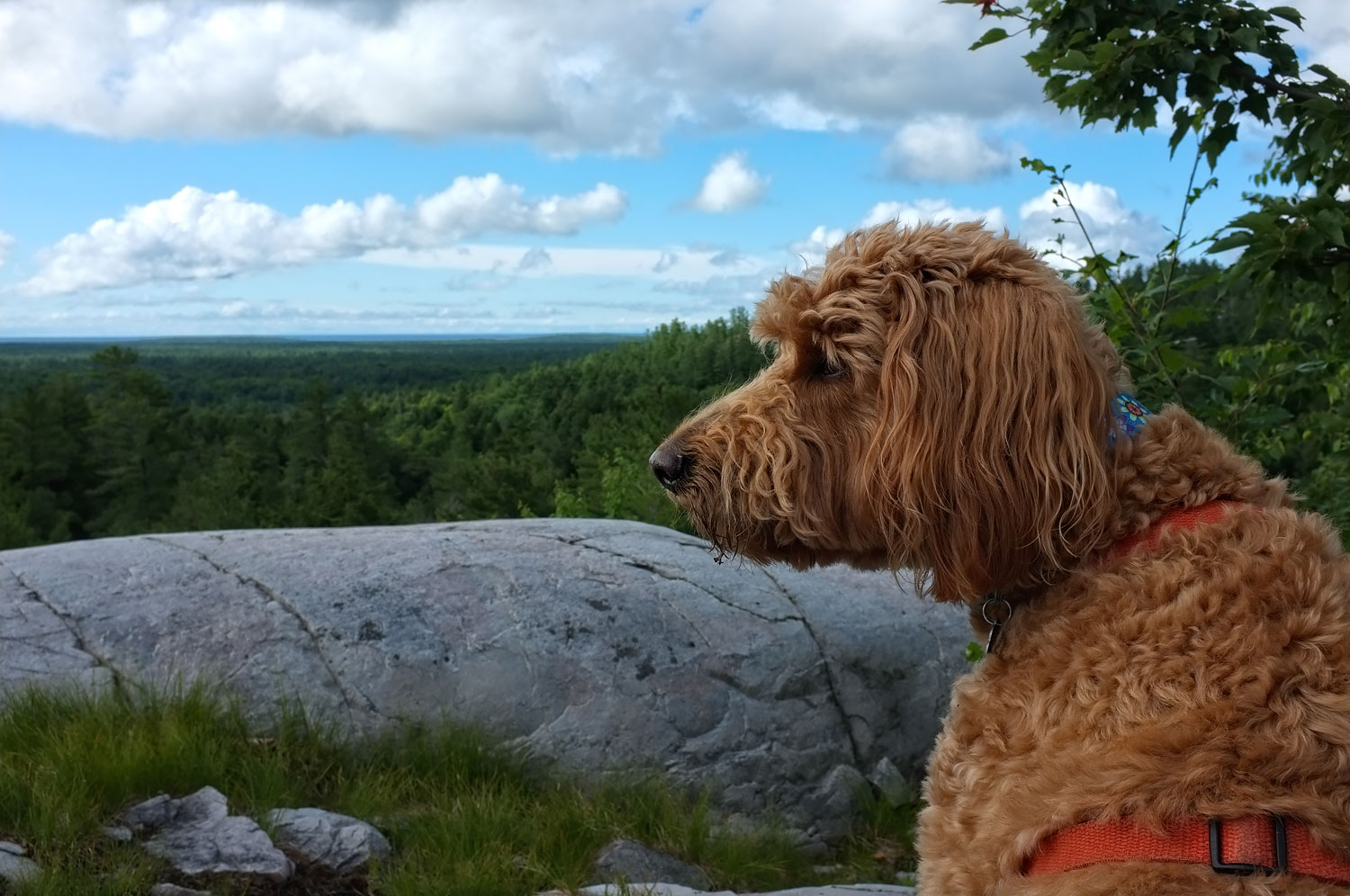Deep Thoughts from Little Minds - Algonquin Provincial Park, Canada  Fuji X100