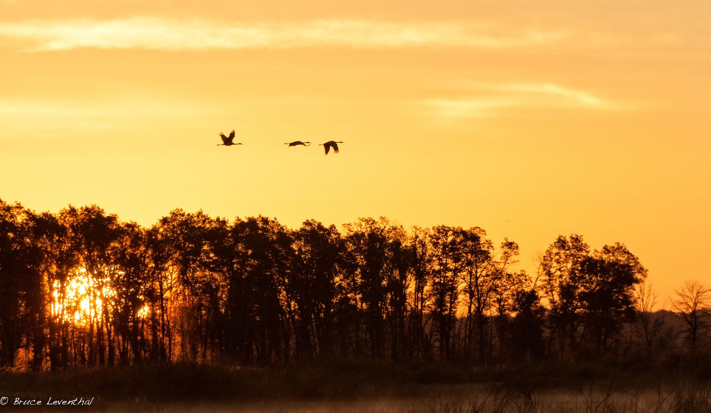 Sunrise Migrants - Crex Meadows Management Area, October 2014  Nikon D300 + Nikon 200-400mm f4.0 AFS