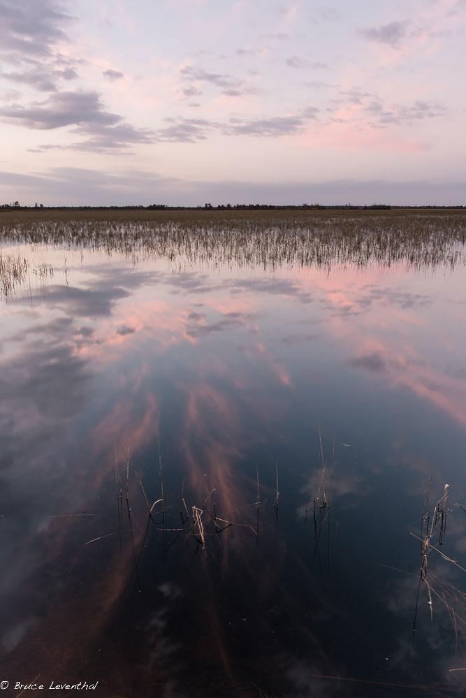 Sunset Roost - Crex Meadows Wildlife Management Area, October 2014  Nikon D800E + Nikon 28mm f1.8G AFS