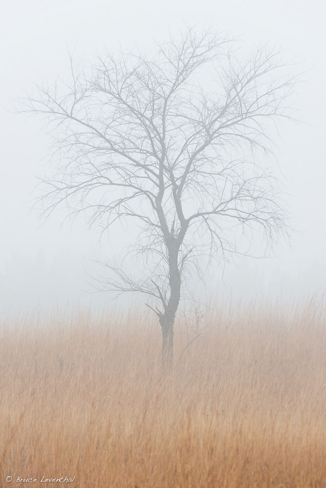 Late Fall Snow Melt - William Obrien State Park   Nikon D800E +   Nikkor AFS200-400mm f4.0 VR1