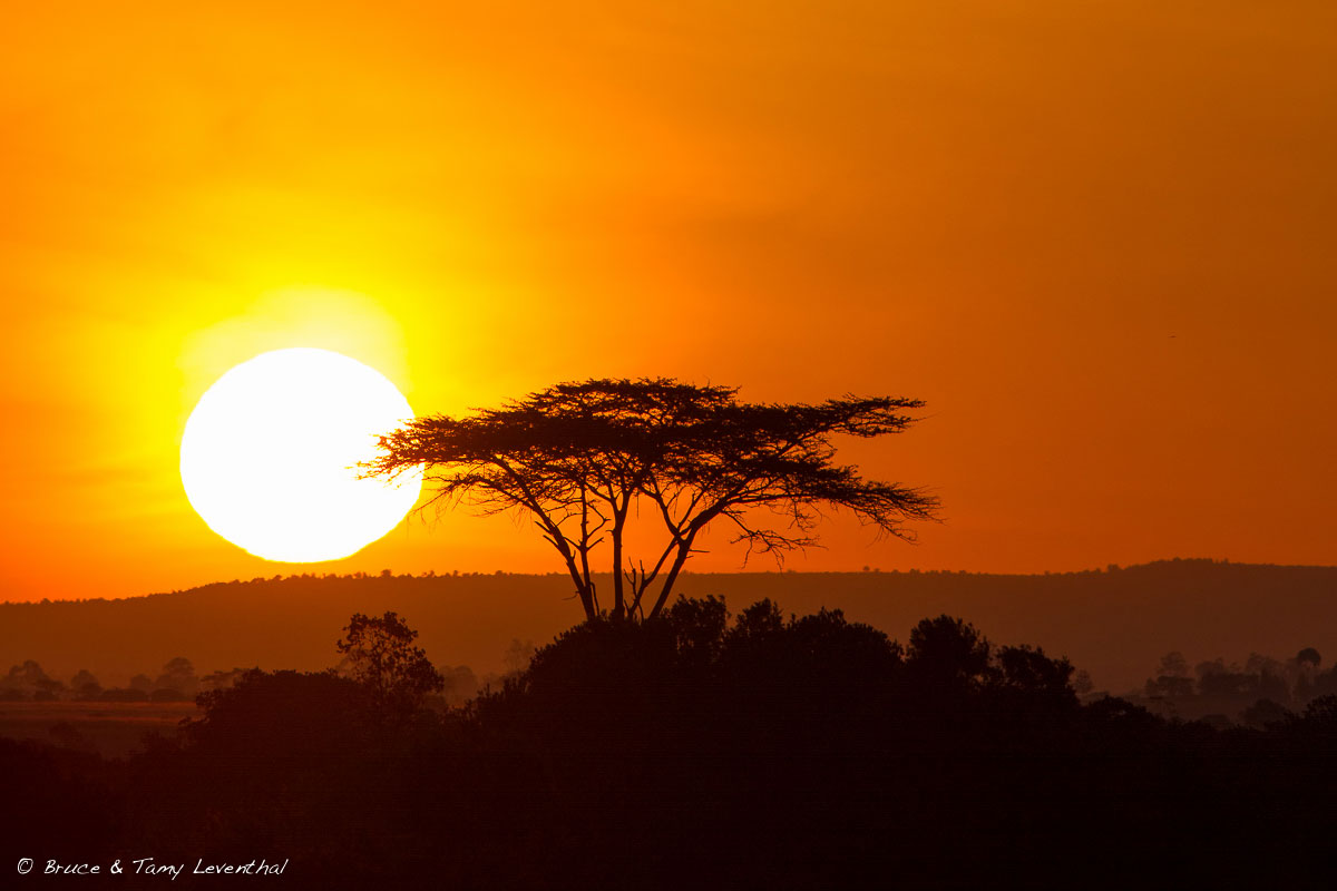 Sweetwater Sunrise - Sweetwater Reserve, Kenya  Canon 5D Mark II + Canon 300mm f2.8L IS