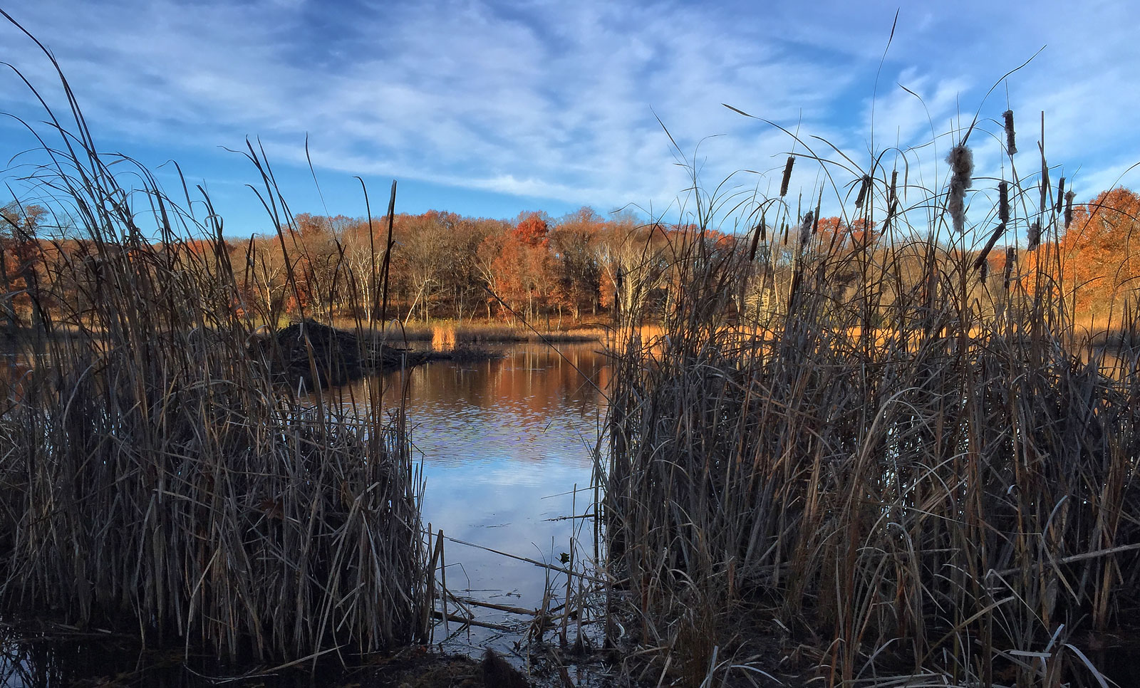 View of Beaver Lodge 11-1-2015  iPhone 6