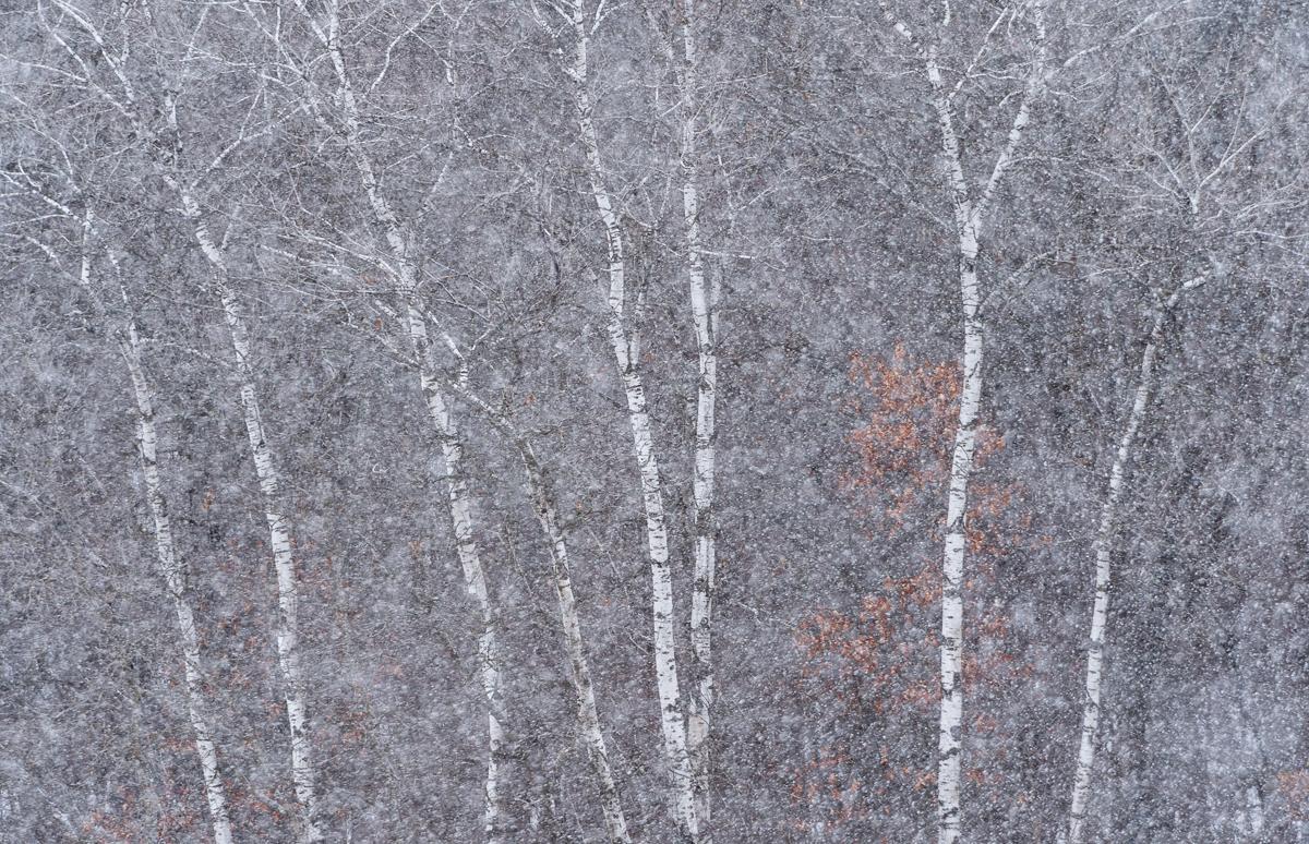 Aspen Snow - February 14, 2016  Nikon D4 + NIkon 200-400mm f4 VR