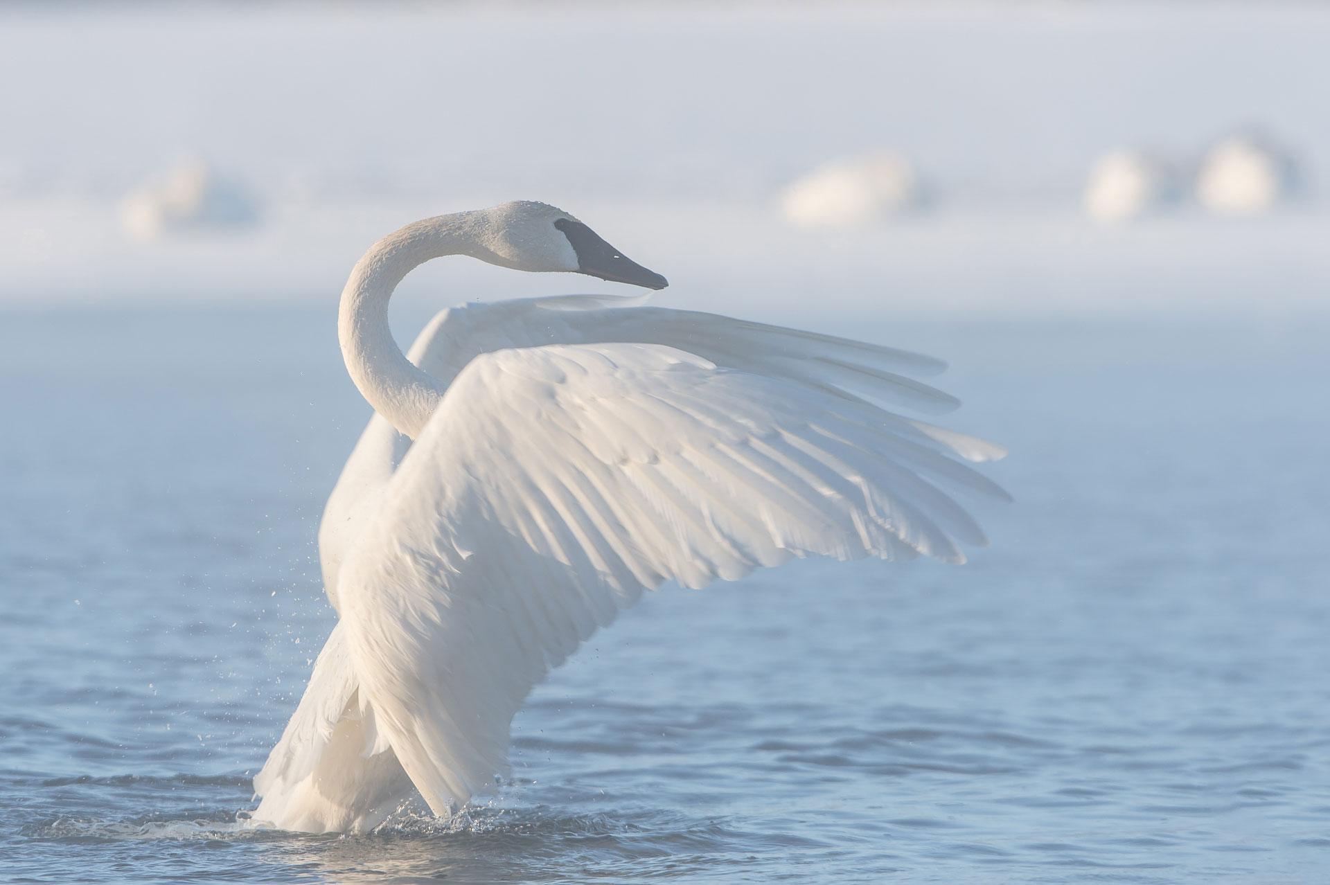 SwanHudson_BJL9851-Edit.jpg