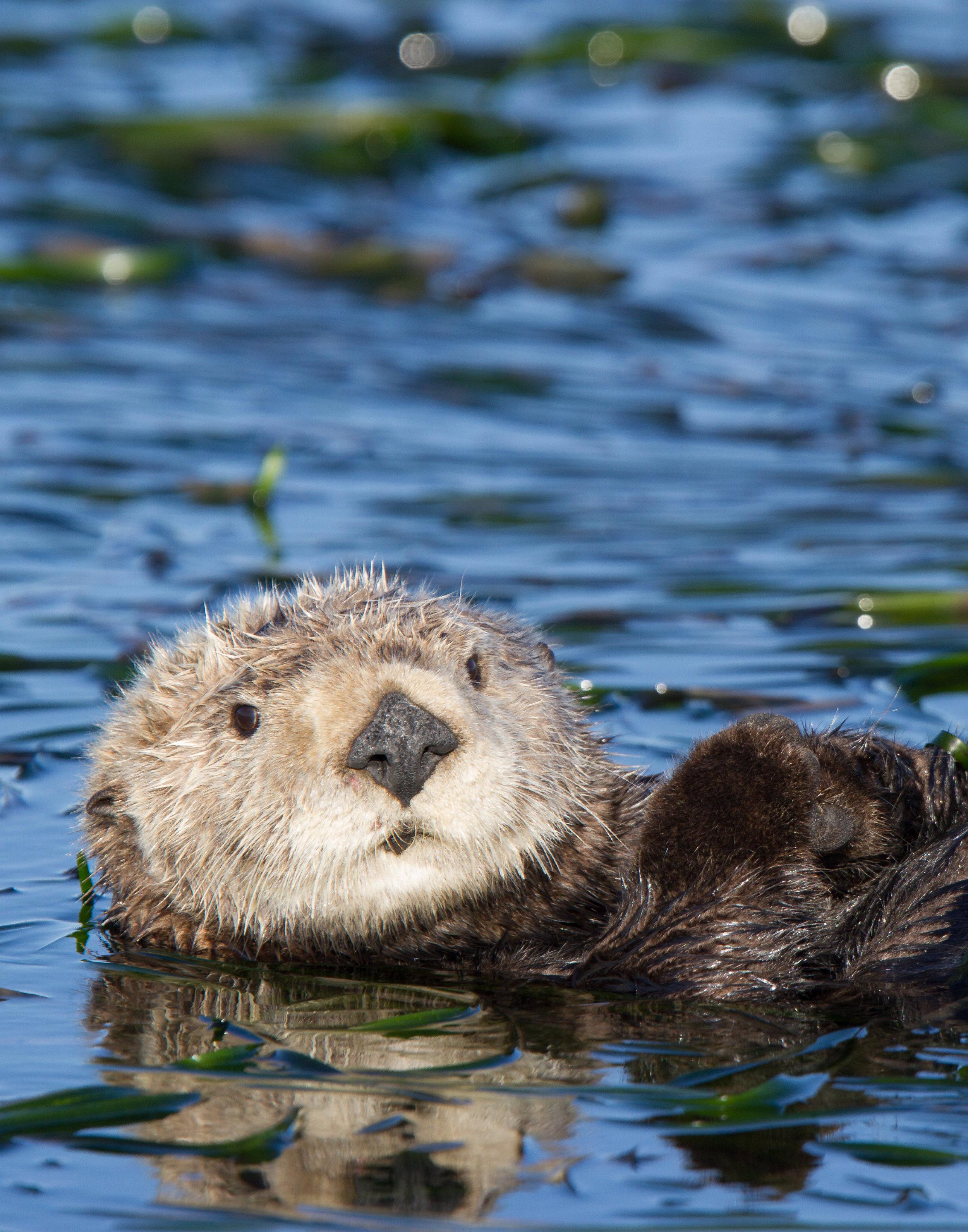 Otter_MG_0905 - 2013-12-01.jpg