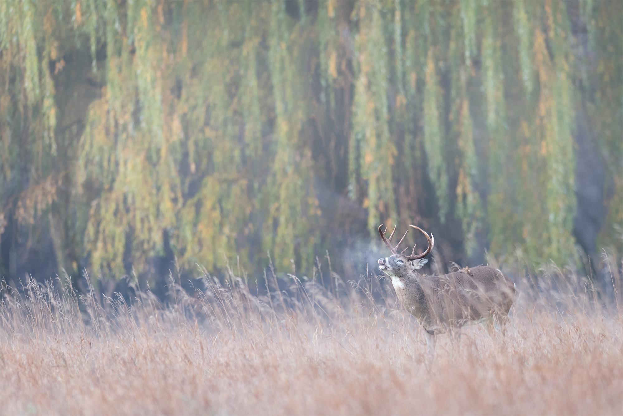 DeerFortSnelling_BTL0454-Edit.jpg