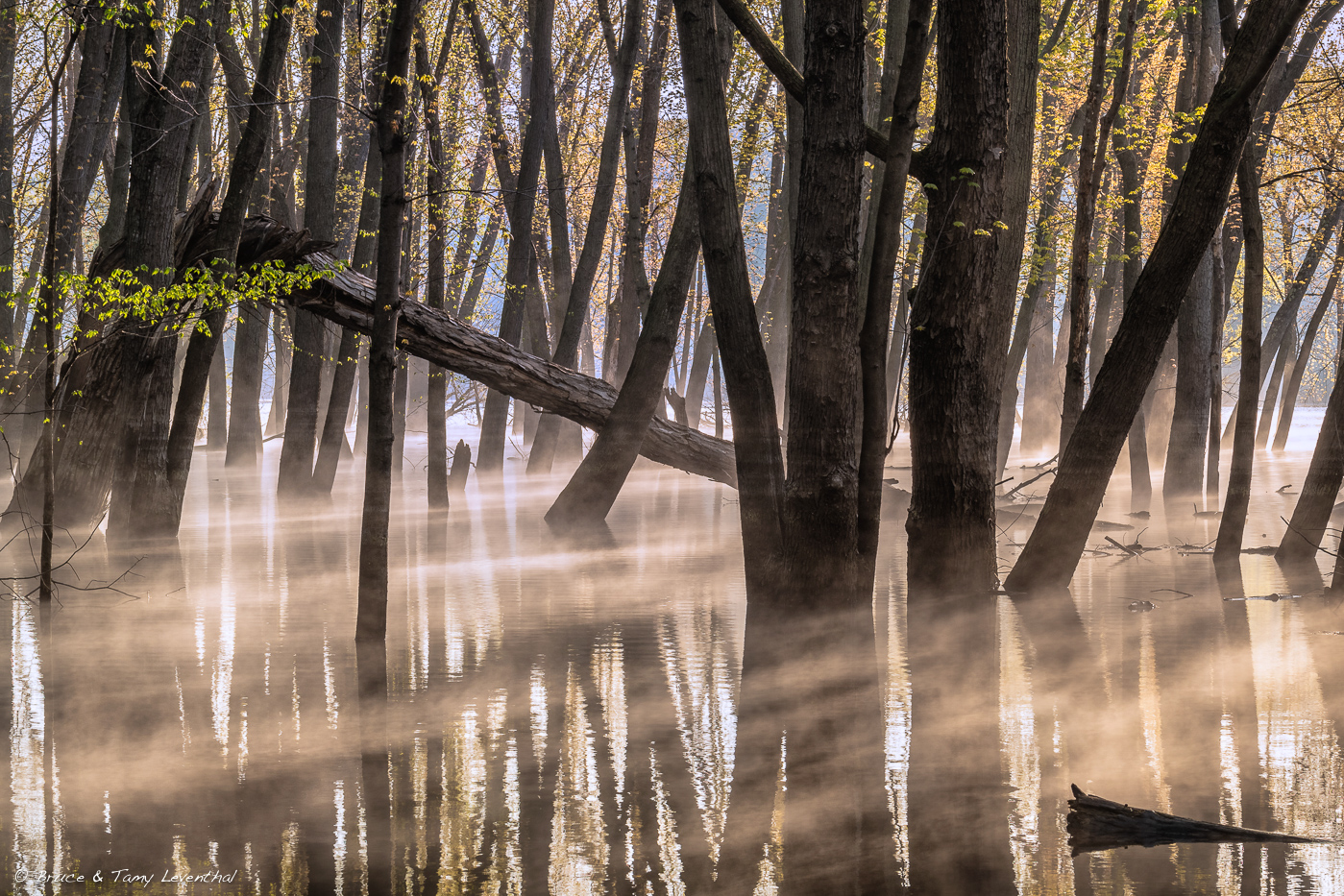FloodedForest_BJL2727-HDR-Edit.jpg
